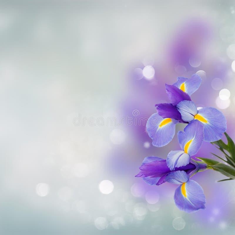 Het blauw irise bloemen dichte omhooggaand royalty-vrije stock afbeeldingen