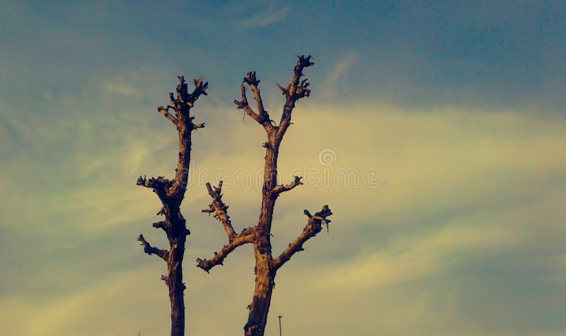 Het blauw van de boomhemel stock afbeelding