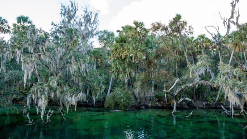 Het blauwe park van de de Lentesstaat Florida stock foto's