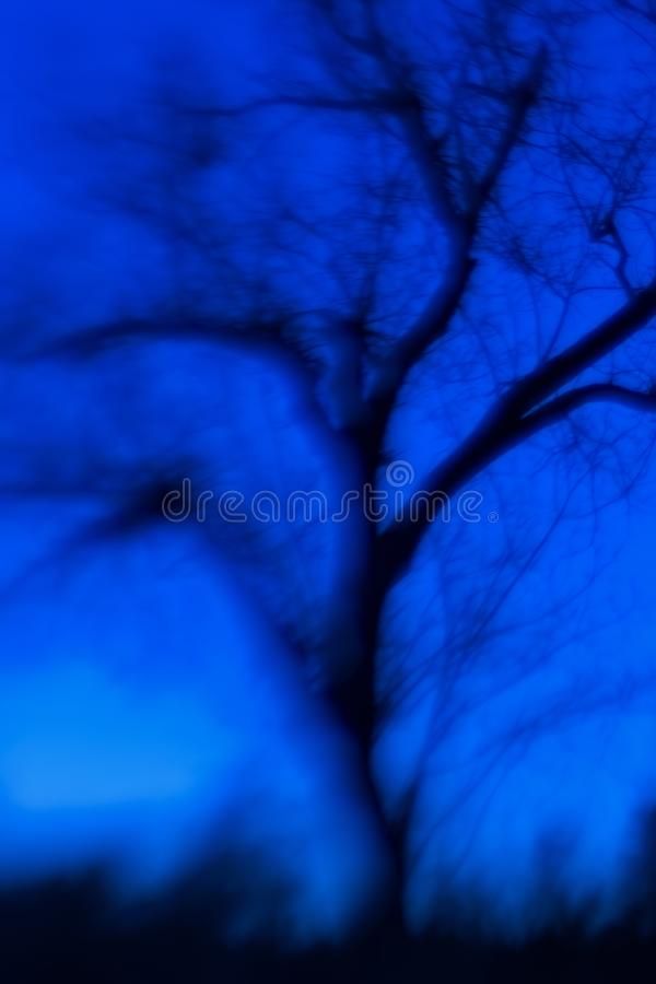 Het Blauwe Uur bij Nationaal het Wildtoevluchtsoord van Balcones Canyonlands, Texas royalty-vrije stock fotografie