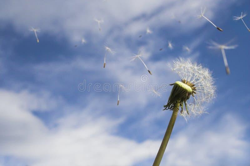 Het Blazen In De Wind Royalty-vrije Stock Afbeelding