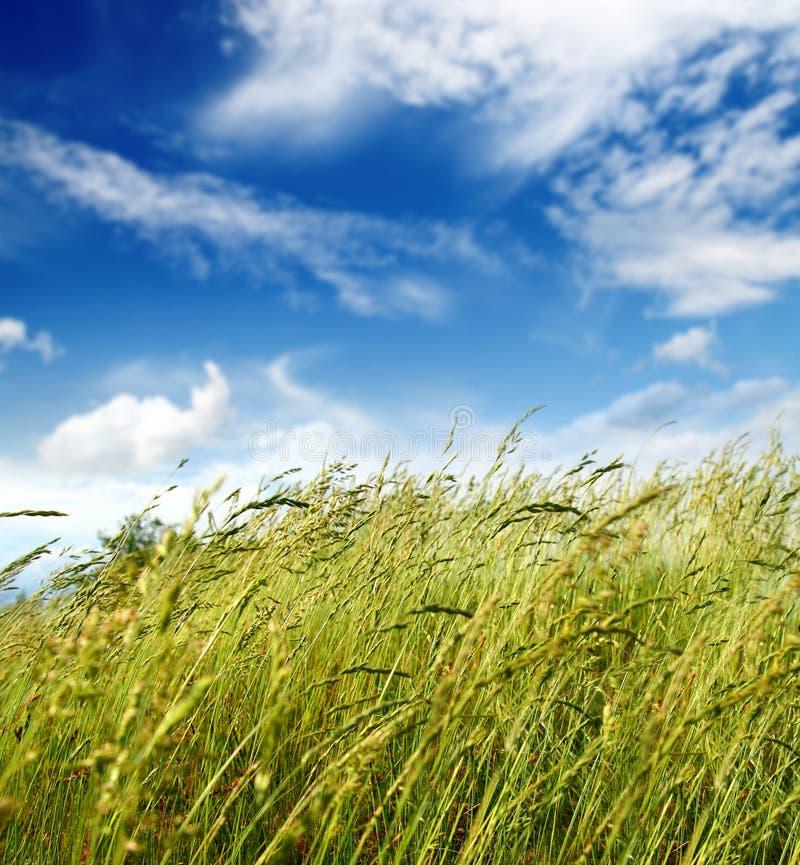 Het blazen van het gras en van de wind stock foto