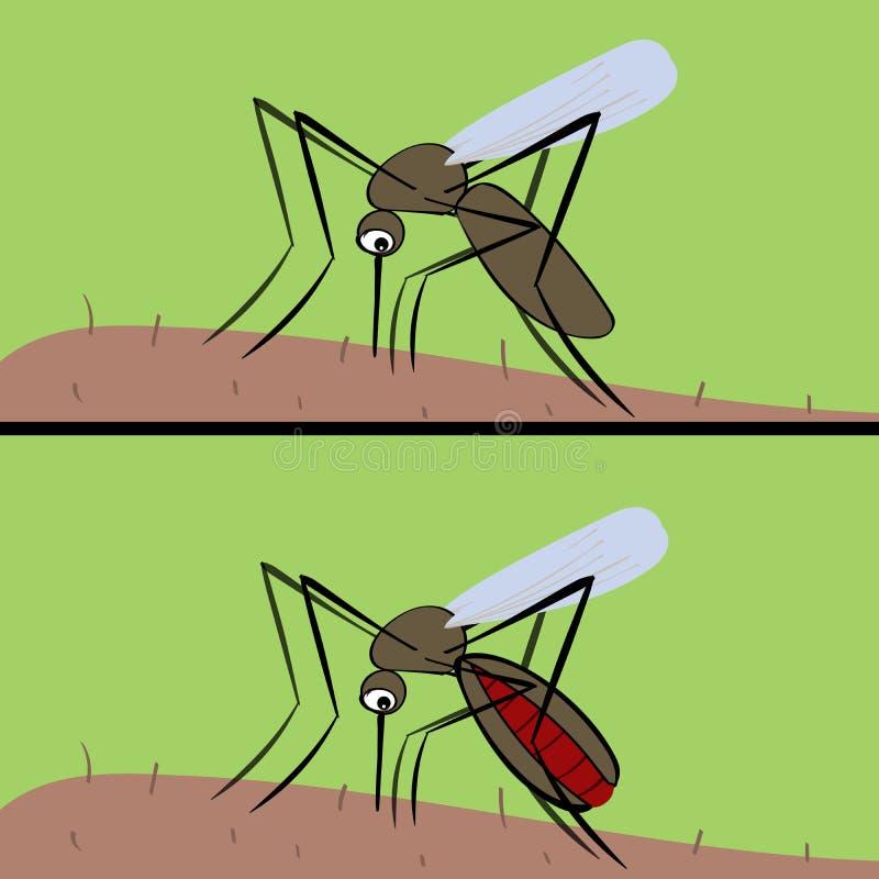 Het bloed van mugdranken De insectvector van malaria en fev vector illustratie