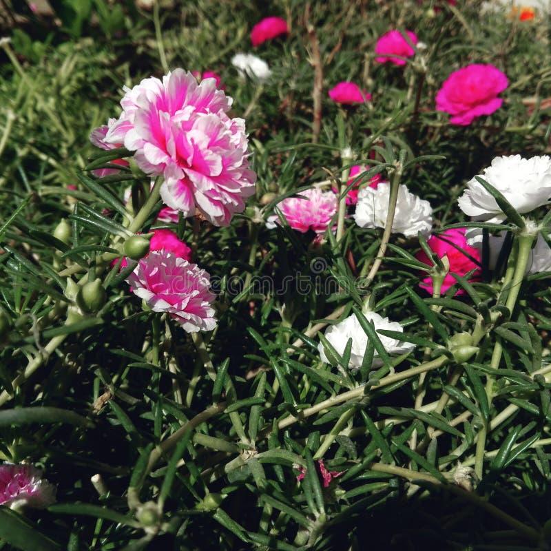 Het bloeien stock foto