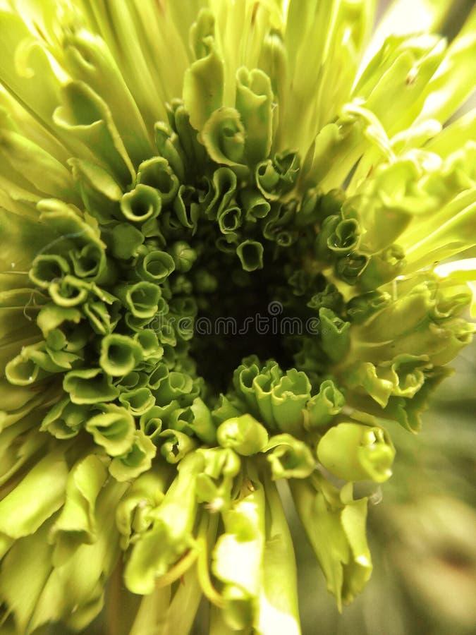 Het bloeien stock fotografie