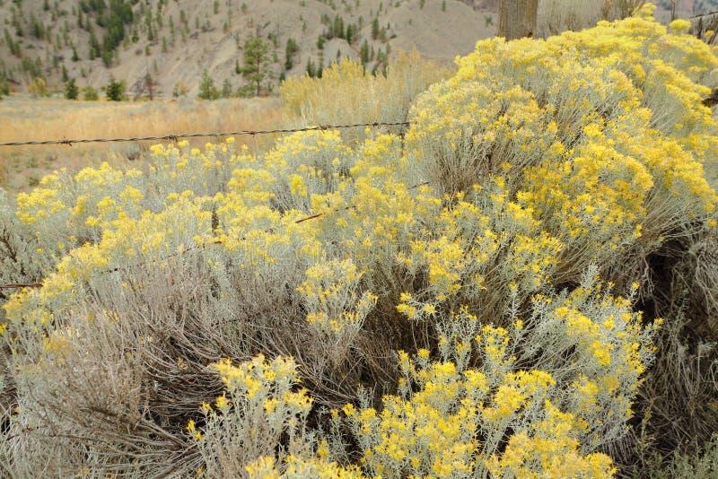 Het bloeien Alsem en Boerderijomheining stock afbeelding