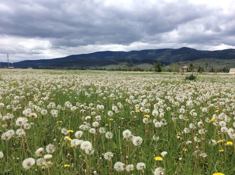Het bloeien in een grijze dag! stock foto