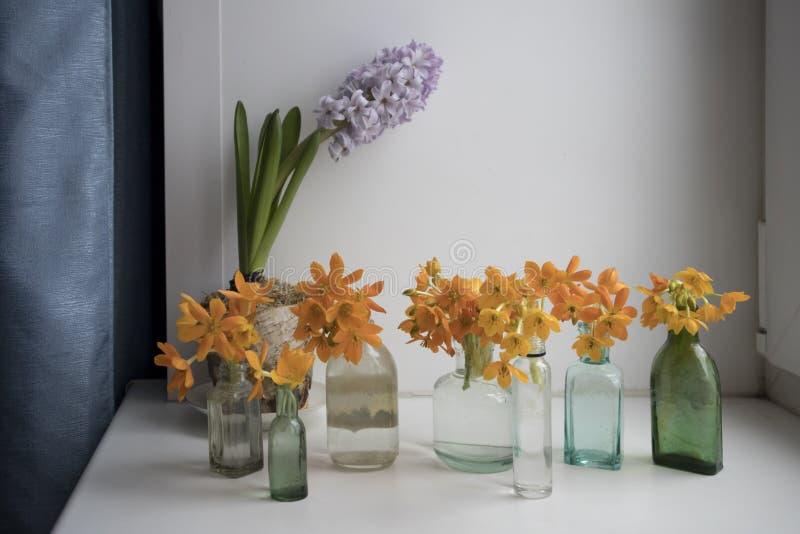 Het Bloeien gele Ornithogalum Dubium in een transparante flessen in plaats daarvan vaas royalty-vrije stock afbeelding