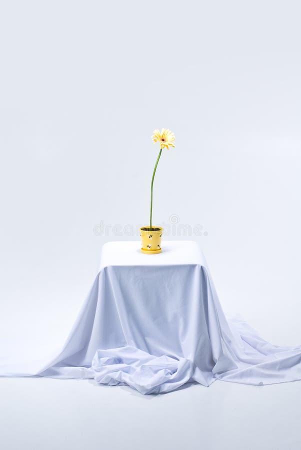 Het bloeien Gerbera op lijst stock afbeelding