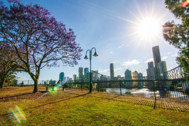 Het bloeien Jacaranda in Brisbane Australië royalty-vrije stock foto's