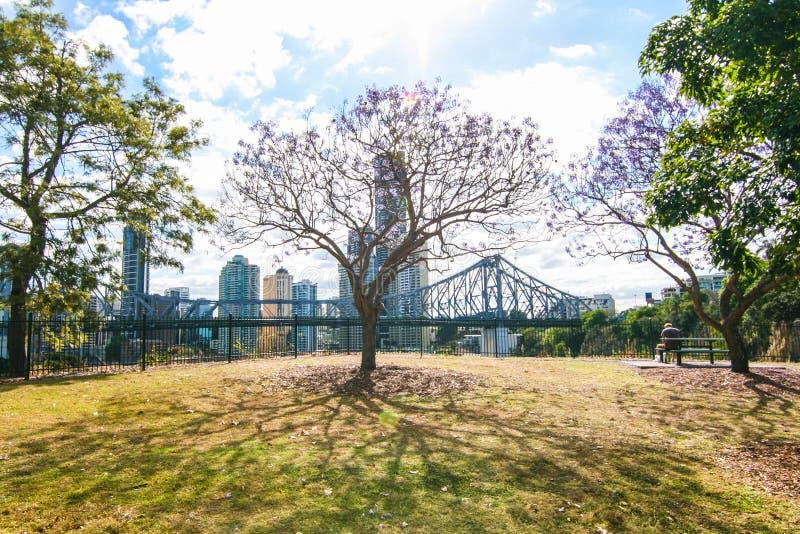 Het bloeien Jacaranda in Brisbane Australië stock fotografie