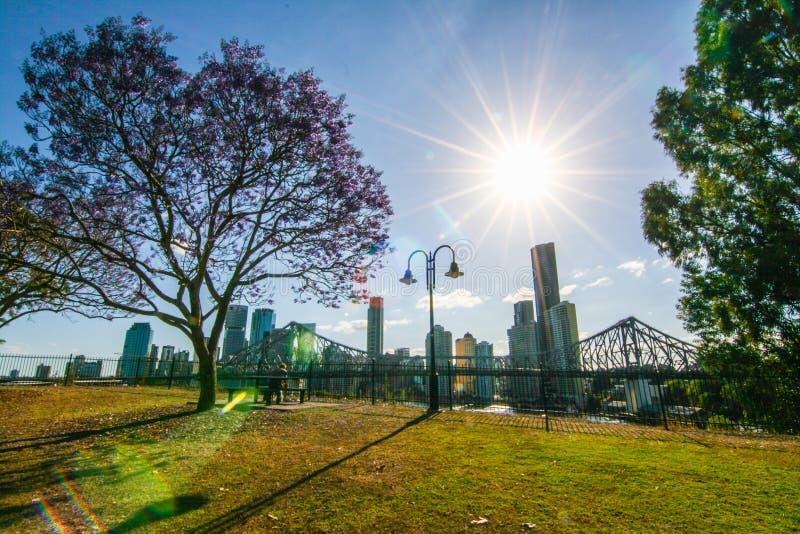 Het bloeien Jacaranda in Brisbane Australië stock afbeeldingen