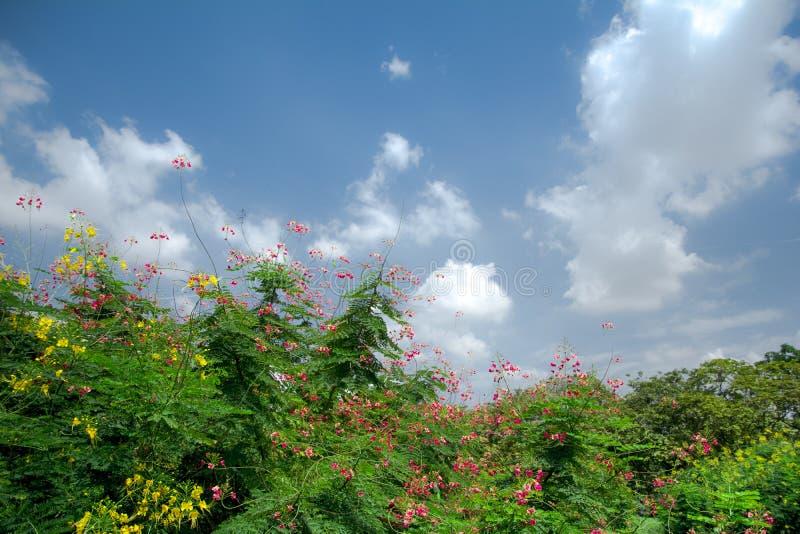 Het bloeien onder de Zon stock afbeelding