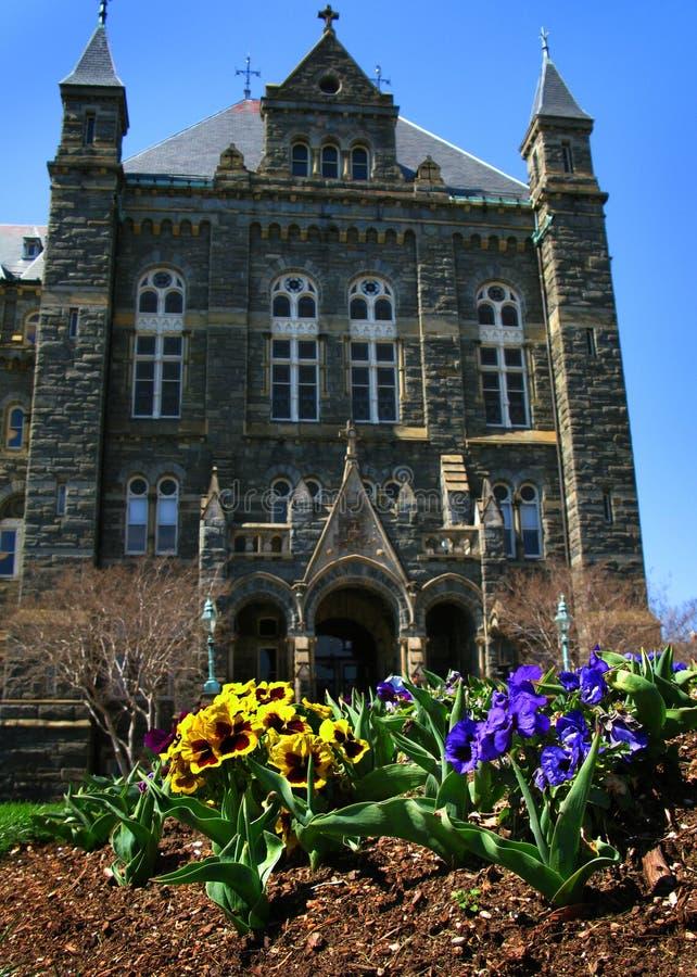 Het bloeien Pansies bij de Universiteit van Georgetown stock afbeelding