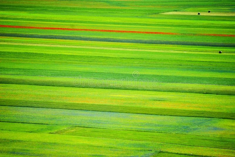 Het bloeien van Castelluccio Di Norcia in Italië op de grote vlakte in het gebied van Umbrië van Italië stock foto