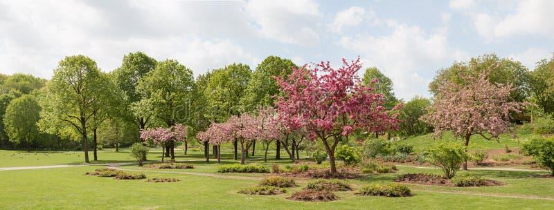 Het bloeien van de bomen van de krabappel bij de stadspark van München westpark stock afbeeldingen