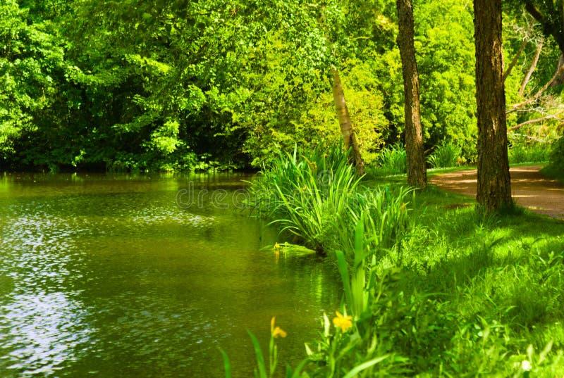 Het bloeien van gras in de zomer in het kanaal wordt weerspiegeld dat stock afbeeldingen