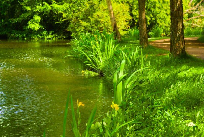 Het bloeien van gras in de zomer in het kanaal wordt weerspiegeld dat stock foto