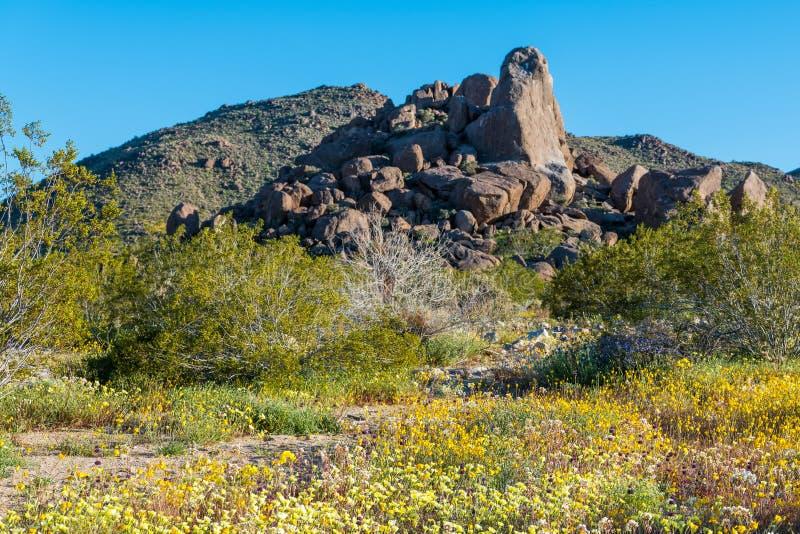 Het bloeien wildflowers in de lente en een rotsvorming in Joshua Tree National Park stock foto