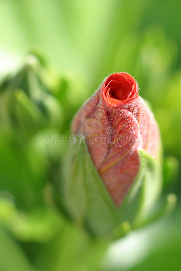 Het bloemblaadje tuit stock fotografie