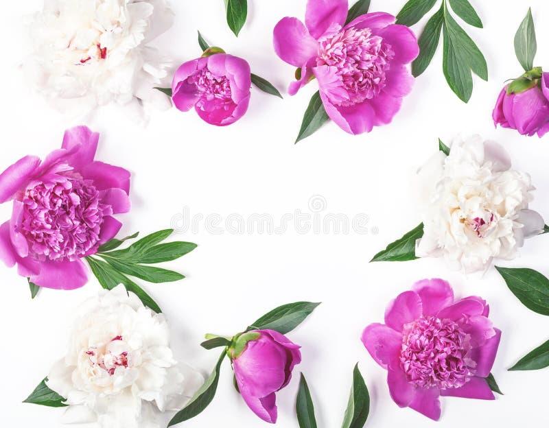 Het bloemendiekader van roze en witte die pioen wordt gemaakt bloeit en bladeren op witte achtergrond worden geïsoleerd Vlak leg stock fotografie