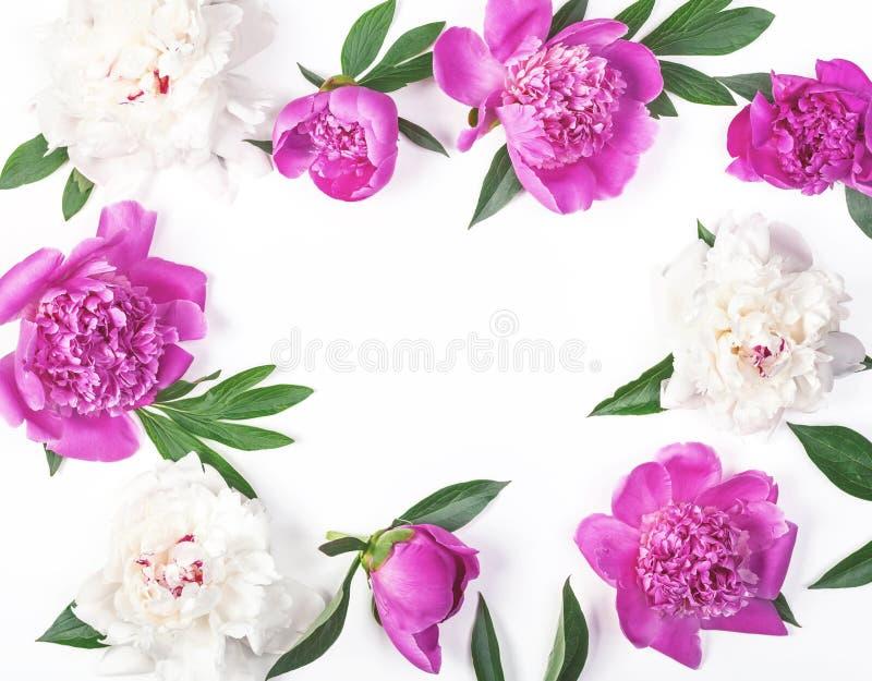 Het bloemendiekader van roze en witte die pioen wordt gemaakt bloeit en bladeren op witte achtergrond worden geïsoleerd Vlak leg stock foto
