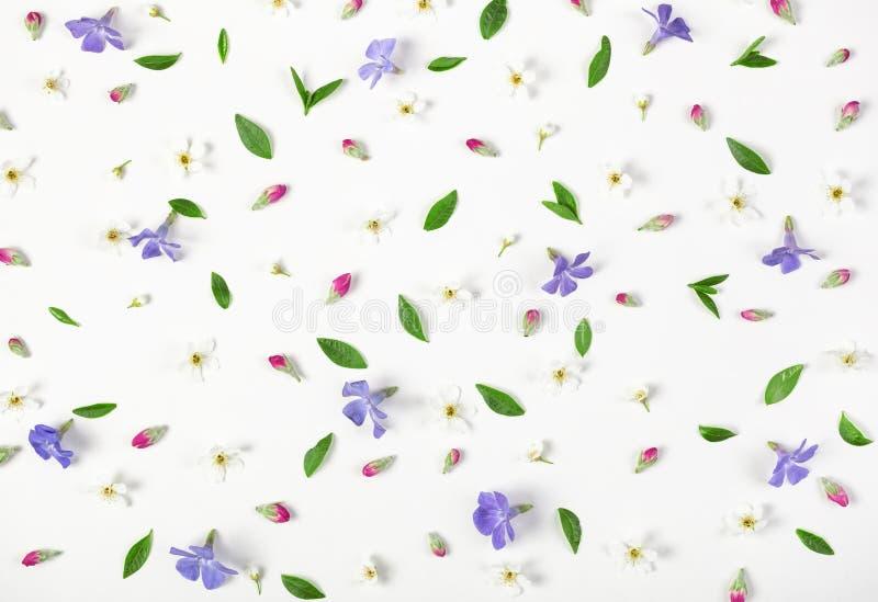 Het bloemendiepatroon van de lente wordt gemaakt bloeit, lilac wildflowers, roze die knoppen en bladeren op witte achtergrond wor royalty-vrije stock afbeeldingen