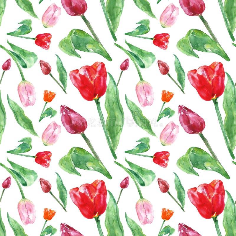 Het bloemendiepatroon van de waterverflente met tulpenbloemen, op witte achtergrond wordt geïsoleerd Kleurrijk naadloos botanisch stock foto