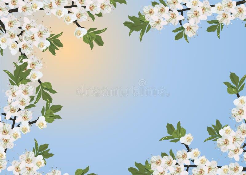Het bloemenframe van Sakura stock illustratie