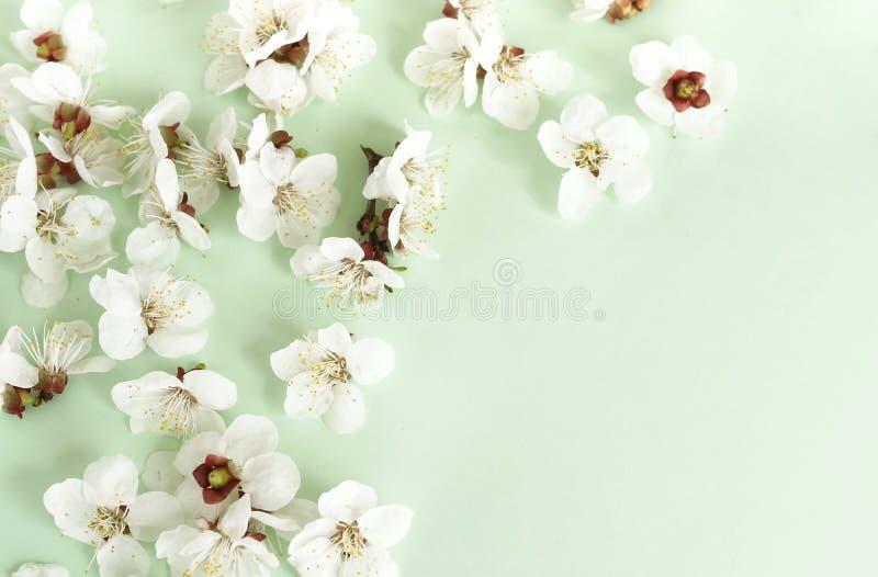 Het bloemenpatroon van de lente bloeit op een bleke muntachtergrond royalty-vrije stock foto