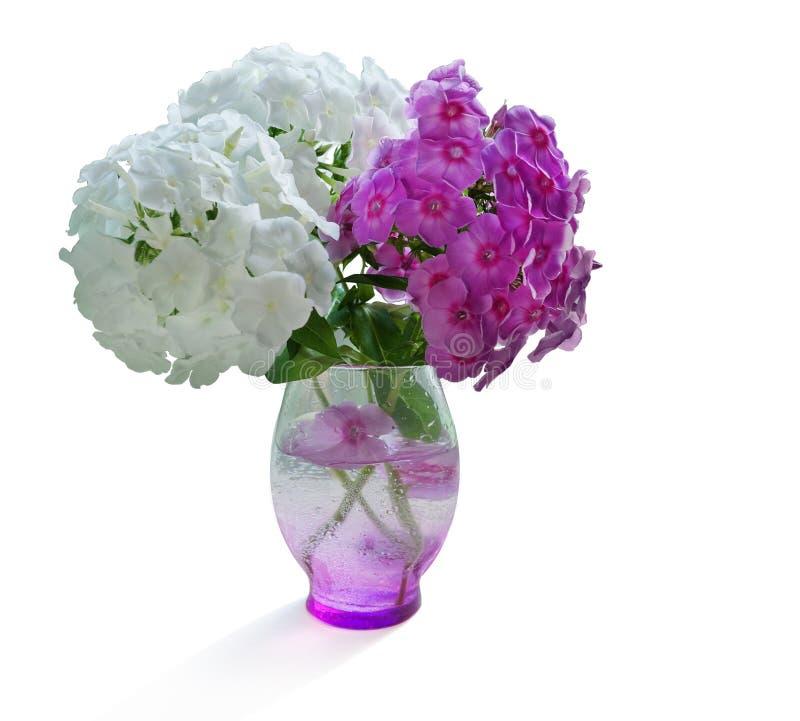 Het boeket in een vaas van tuin bloeit kruidnagels witte roze Flox geïsoleerde witte achtergrond royalty-vrije stock afbeeldingen