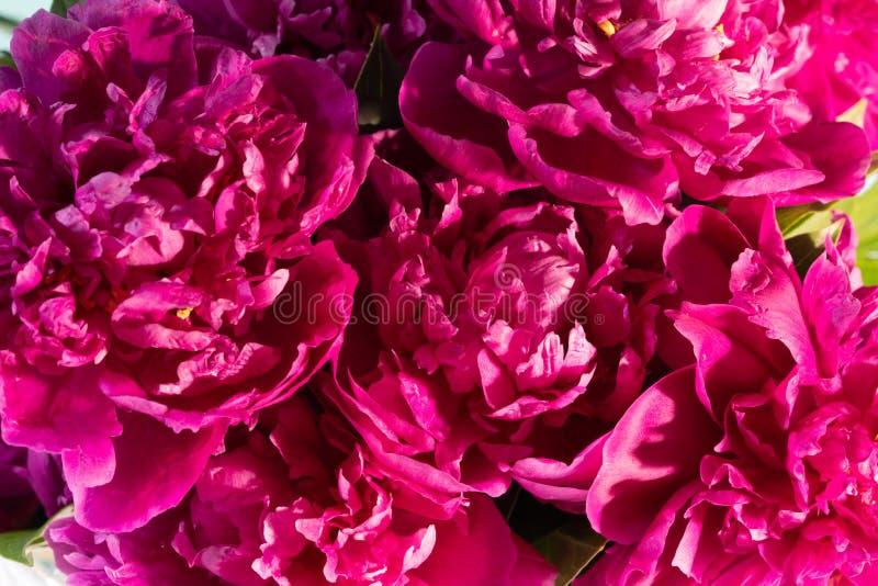 Het boeket van bloemen van pioenen is in een vaas stock foto's