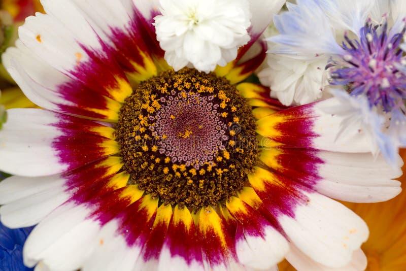 Download Het Boeket Van Bloemen Sluit Omhoog Stock Foto - Afbeelding bestaande uit kleur, roze: 39107662