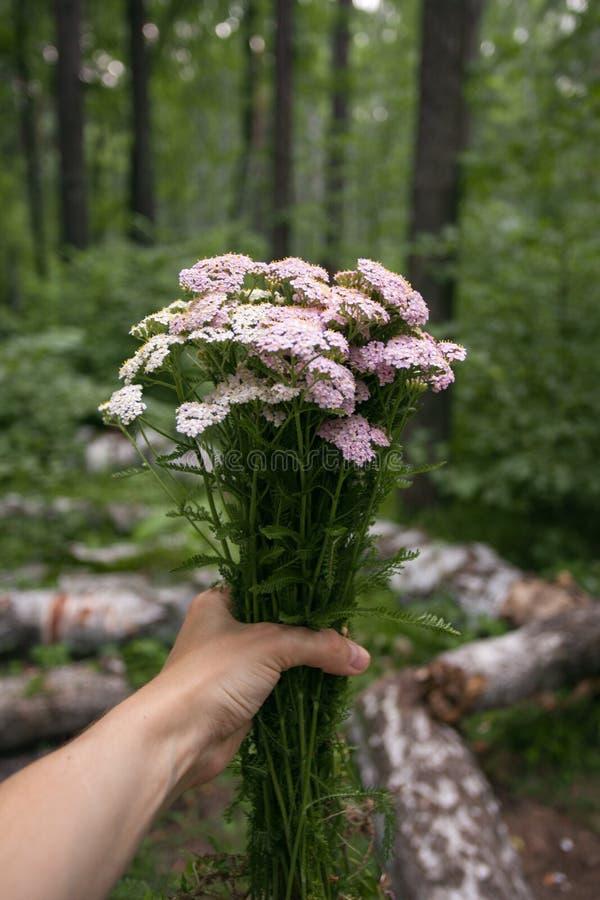 Het boeket van de handholding van bosbloemen met hand bij aardbos, Vrije tijdslevensstijl Stijl van Eco de Organische Hipster avo royalty-vrije stock foto's