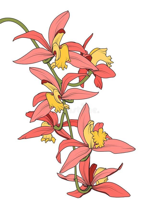 Het boeket van de phalaenopsistak van de Cattleyaorchidee op witte achtergrond wordt geïsoleerd die Koraal roze gele exotische tr royalty-vrije illustratie