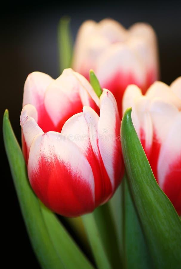 Het boeket van de tulp royalty-vrije stock fotografie