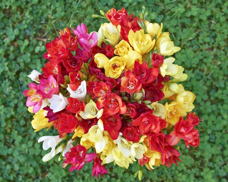 Het boeket van fresiabloemen op groene grasachtergrond stock foto's