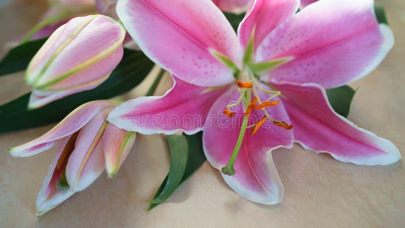 Het boeket van roze leliebloem ligt op natuurlijke kleurenraad, Valentijnskaartendag, huwelijksdag, Gelukkige Verjaardag royalty-vrije stock foto