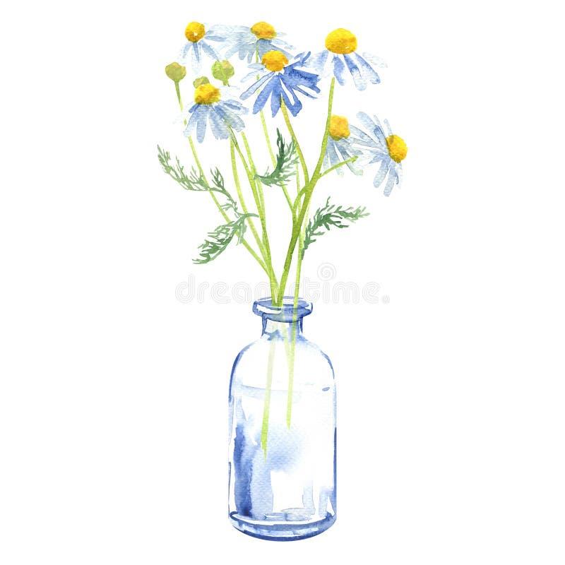 Het boeket van tuinkamille bloeit in een glasvaas of een fles, kamillemadeliefje, geïsoleerde kamilleinstallatie, getrokken hand vector illustratie