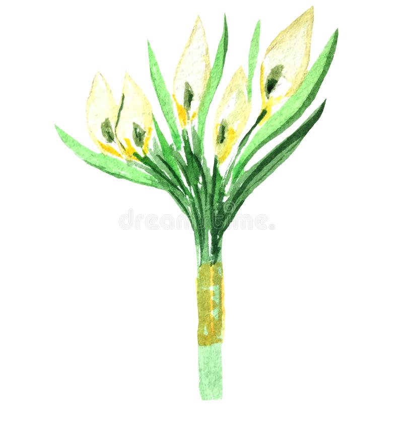 Het boeket van het waterverfhuwelijk van witte callas stock illustratie