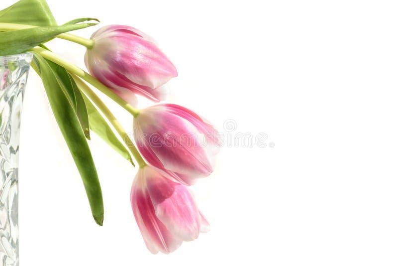 Het boeket witte achtergrond van tulpen roze bloemen stock foto's