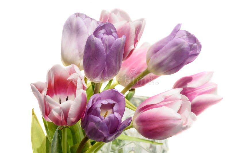 Het boeket witte achtergrond van tulpenbloemen stock foto's