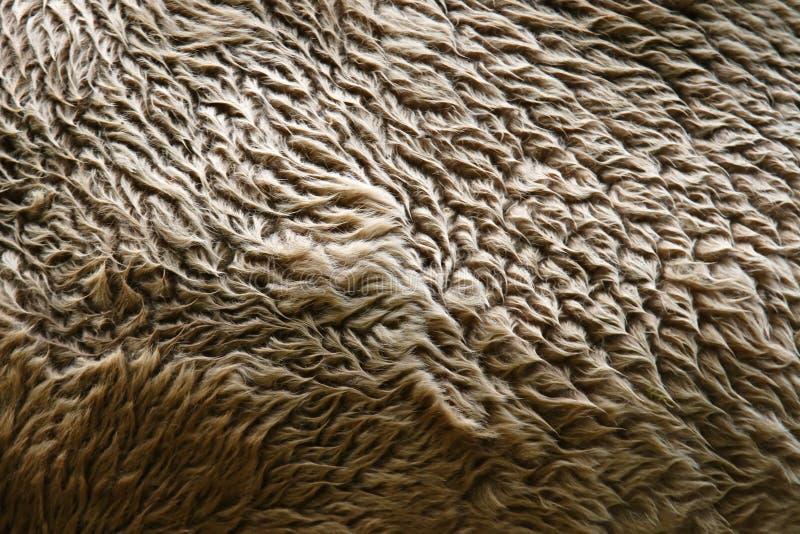 Het bont van de kameel royalty-vrije stock afbeeldingen