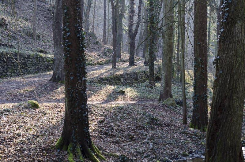 Het bos stock fotografie
