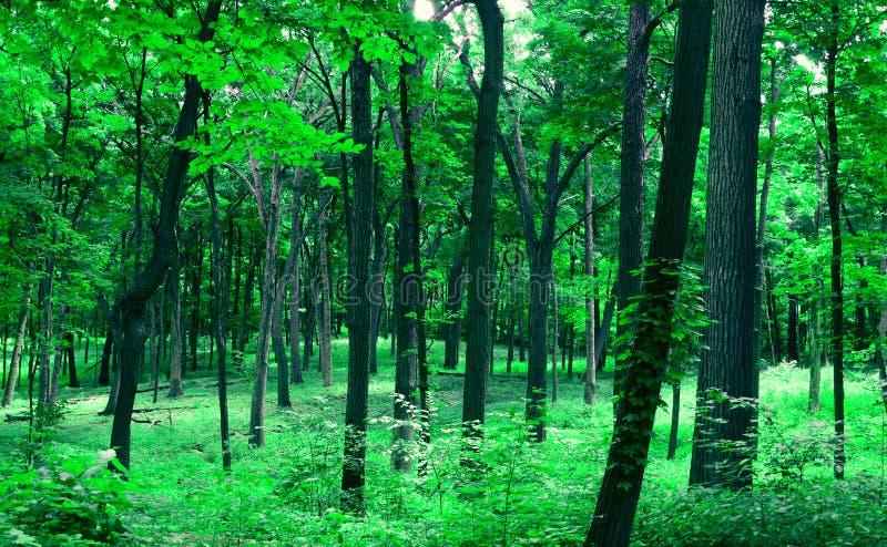 In het bos royalty-vrije stock afbeeldingen