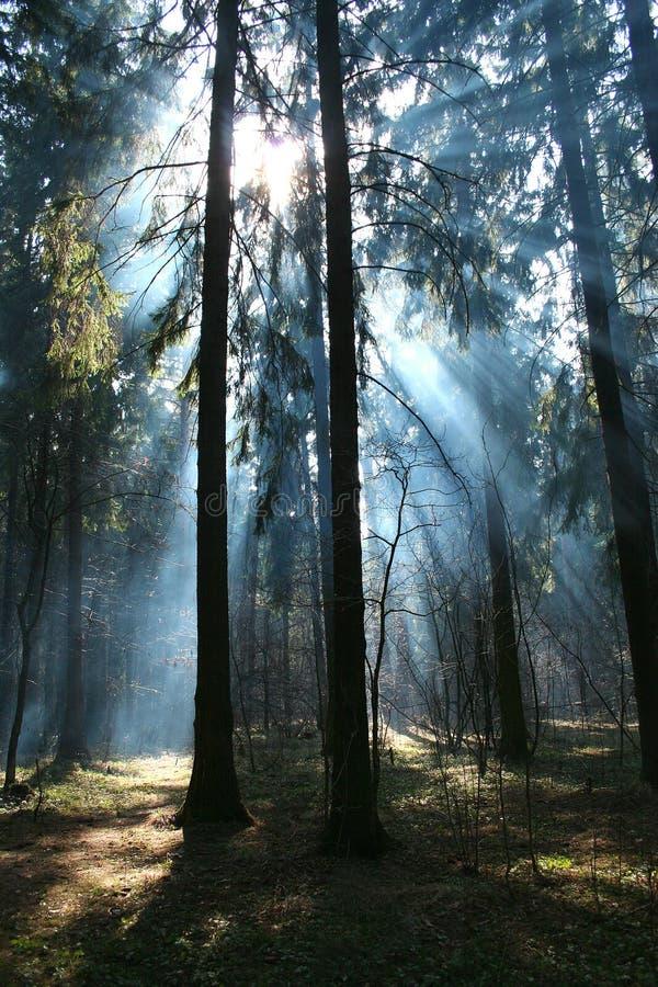 In het bos. stock foto