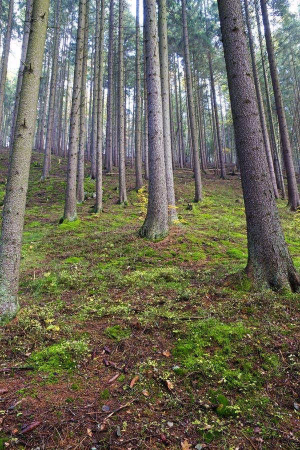 Het bos behandelt mos royalty-vrije stock fotografie