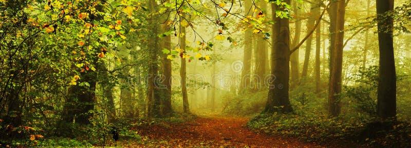 In het bos in de herfst in de mist stock afbeelding