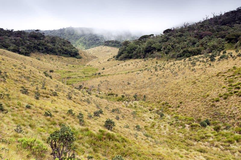 Het Bos, de savanne, en de wolken van de mist bij Vlaktes Horton royalty-vrije stock foto's