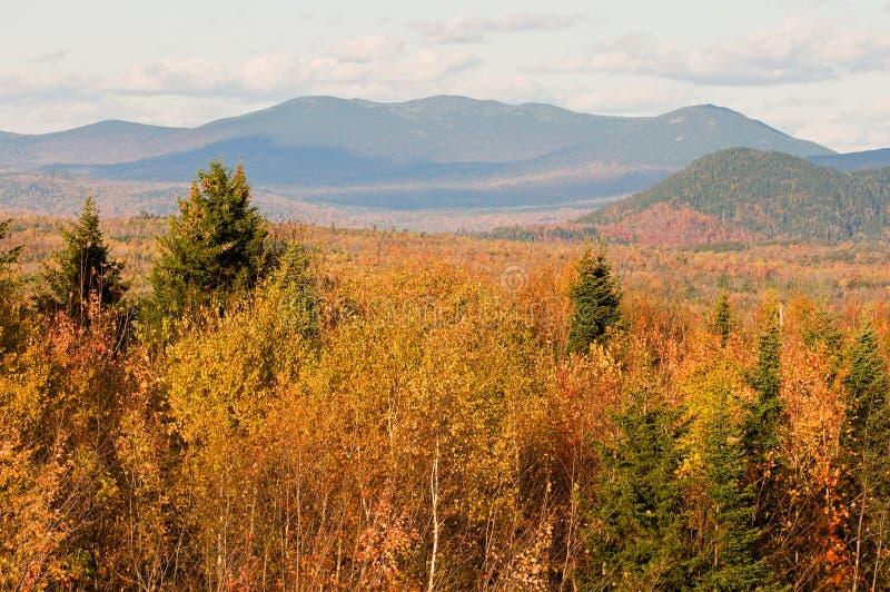 Het bos en de bergen van de herfst royalty-vrije stock afbeeldingen